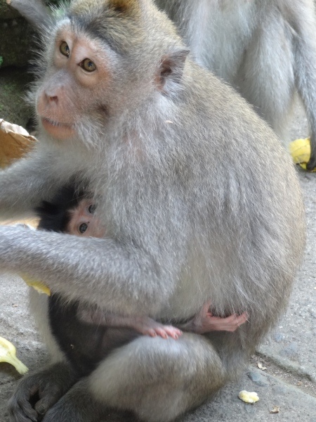 at the monkey sanctuary in Ubud