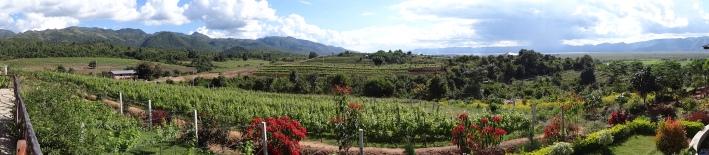 view towards Inle Lake from vineyard