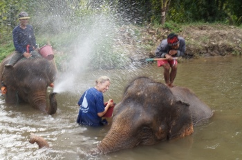 bathing with the elephants